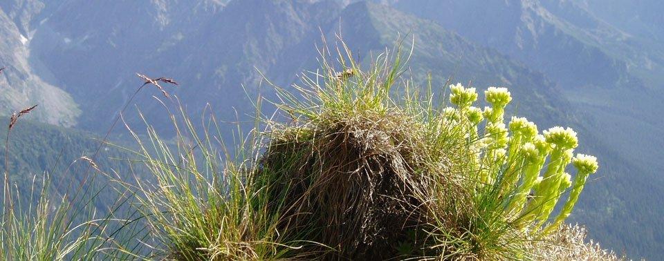 Oboz biegowy w Tatrach 04